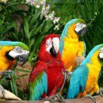 5 Favorite Spots at Jurong Bird Park That You Shouldn't Miss